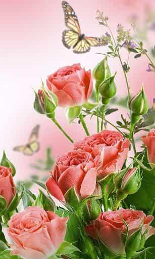 15450403e52 Цветы Живые Обои на андроид скачать бесплатно - androfon.ru