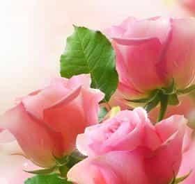 Цветы Live Wallpaper