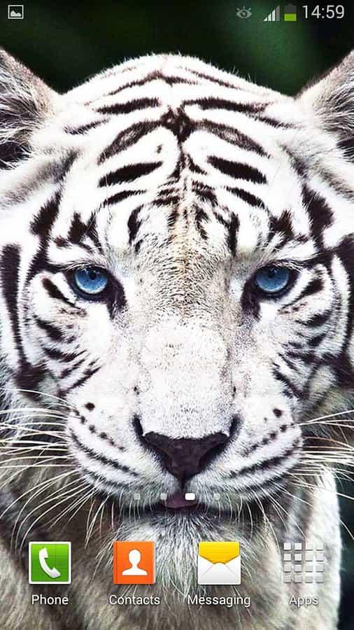Тигр Live Wallpaper