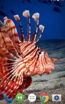 Flora Coral Fish 3D живые обои
