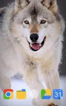 Winter Life Animals живые обои