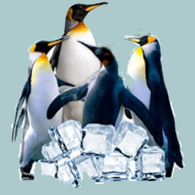 Arctic Penguin живые обои