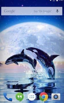 Dolphin Ocean Ripple Effect живые обои