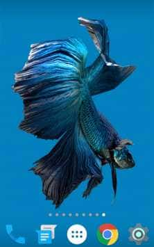 fish скриншот 2