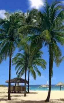 palms скриншот 1