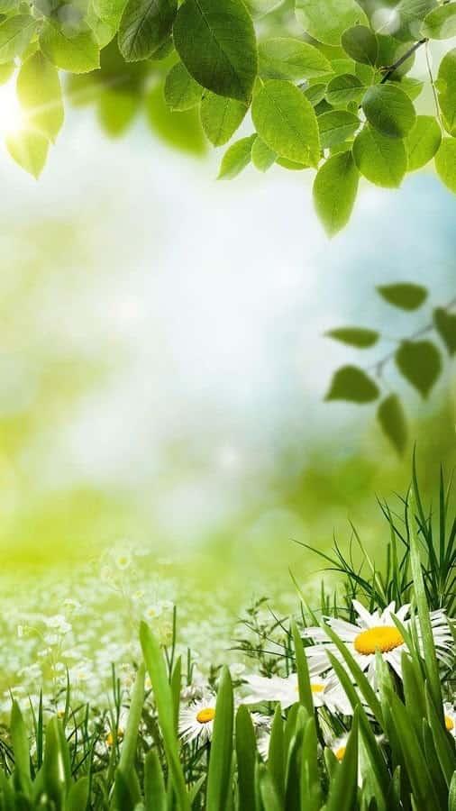 Зеленая Весна живые обои