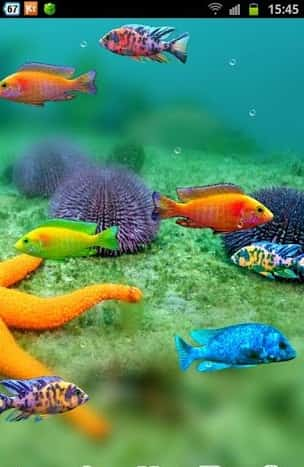 Fish Tank живые обои