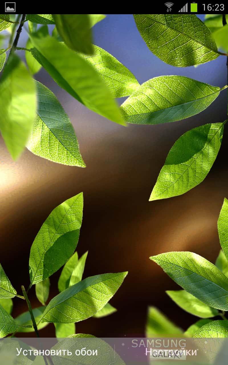 Fresh Leaves живые обои