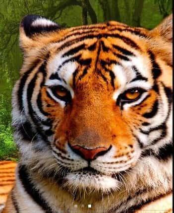 3D animals parallax logo