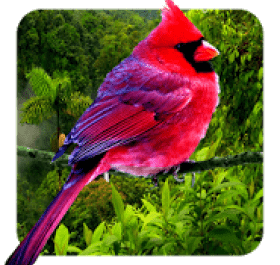 3D birds parallax live wallpaper
