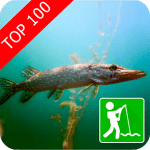 Клевая рыбалка logo
