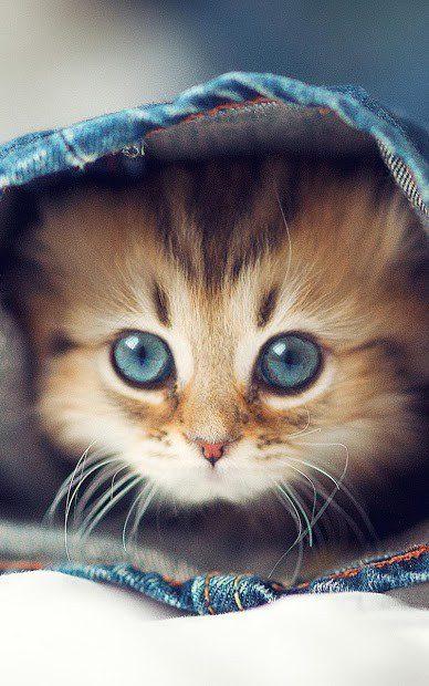 Котята скриншот 1
