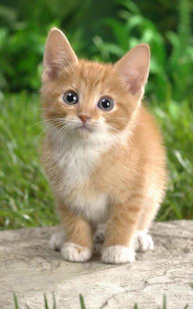 Котята скриншот 4