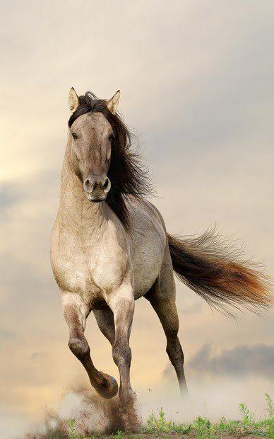 Лошади Живые Обои скриншот 1
