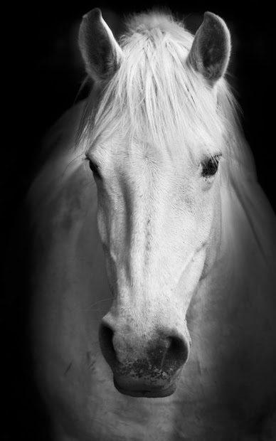 Лошади Живые Обои скриншот 2