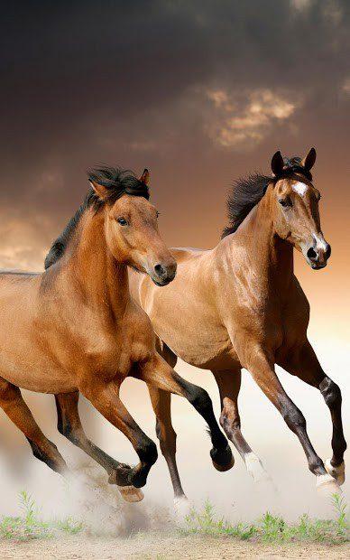Лошади Живые Обои скриншот 4
