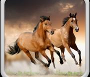 Лошади Живые Обои logo