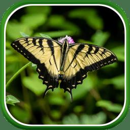 macro butterflies logo