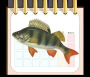 Календарь рыбака logo