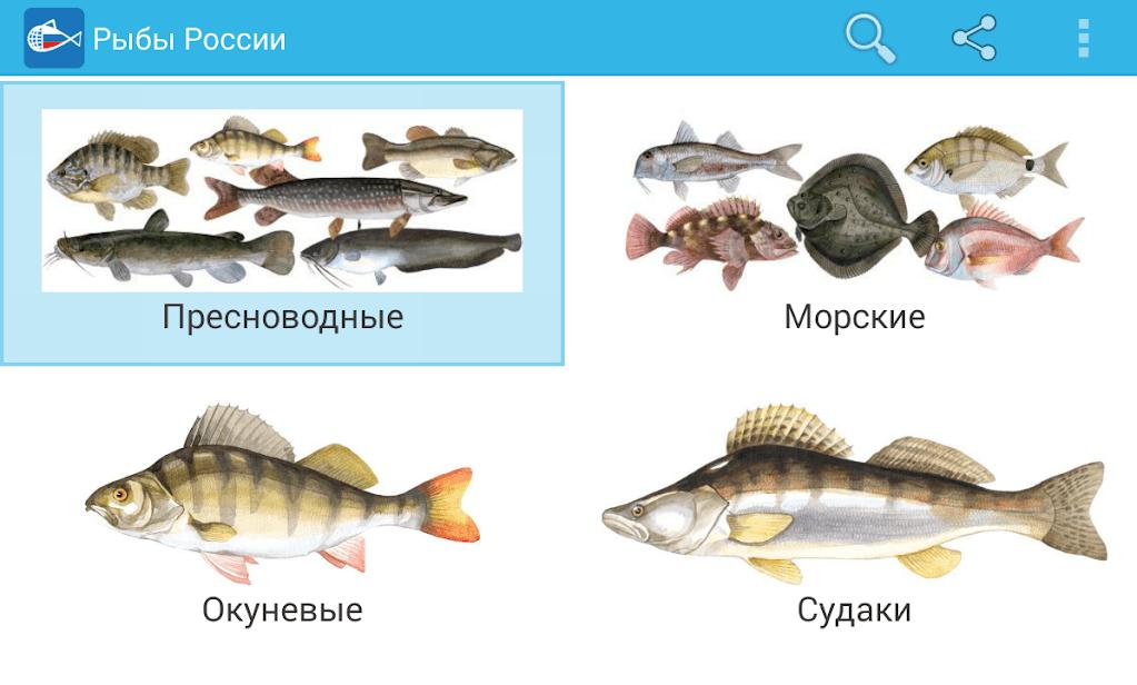 Рыбы России скриншот 1