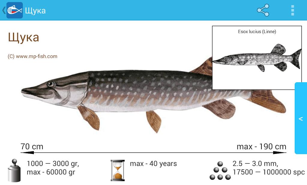 Рыбы России скриншот 2