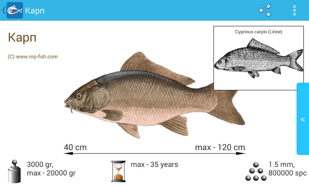 Рыбы России скриншот 3