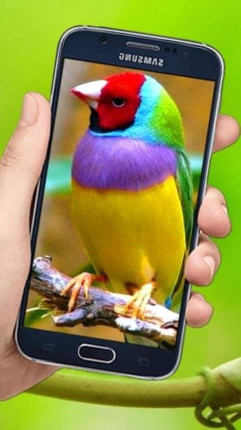 Летающие птицы скриншот 1
