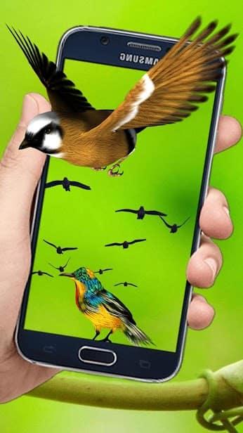Летающие птицы скриншот 2