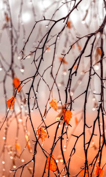 Осенний Дождь скриншот 1