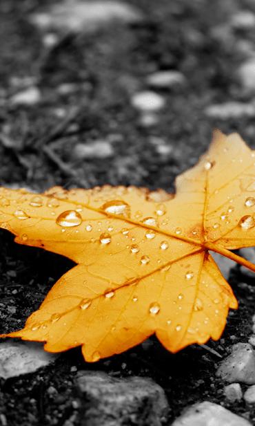 Осенний Дождь скриншот 2