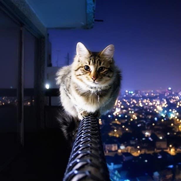 Кошка скриншот 4