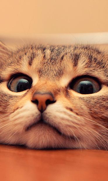 Кошки скриншот 1