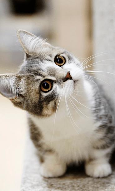 Кошки скриншот 2