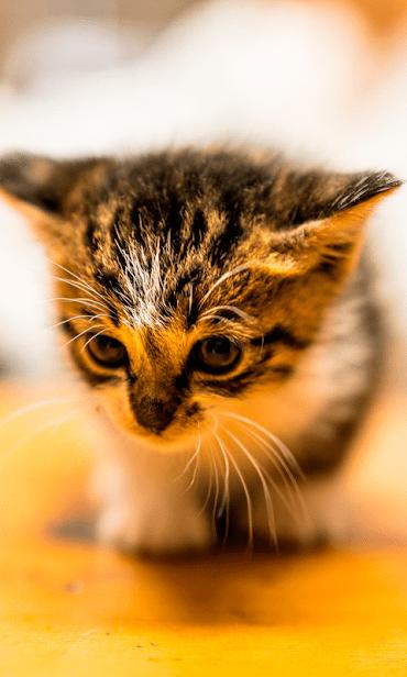 Кошки скриншот 3