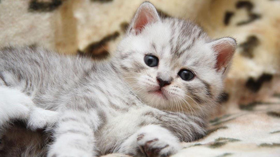 Кошки скриншот 4
