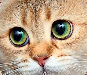 Кошки logo