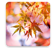 Красивая осень logo