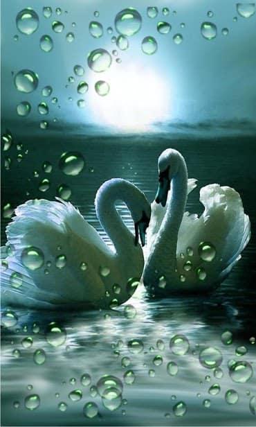 Лебеди скриншот 3