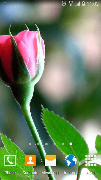 Розы скриншот 3