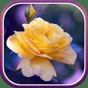 Розы logo
