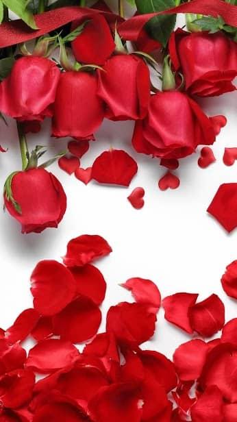 Роза, Цветочная, Цветочный фон: Rosely скриншот 1