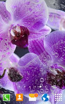 Цветы Орхидеи скриншот 2