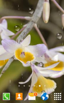 Цветы Орхидеи скриншот 3