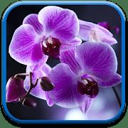 Цветы Орхидеи logo