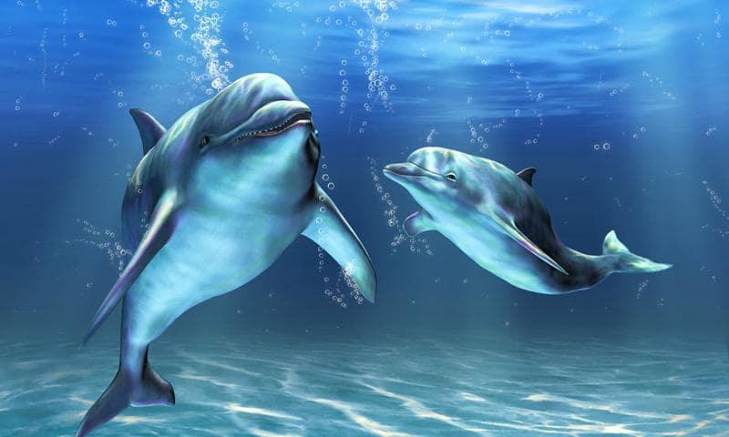 Дельфины скриншот 1