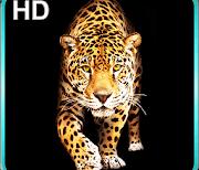 Гепард logo