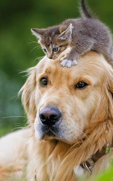 Кошки и Собаки скриншот 1