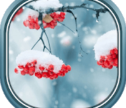 Красивые зимние logo