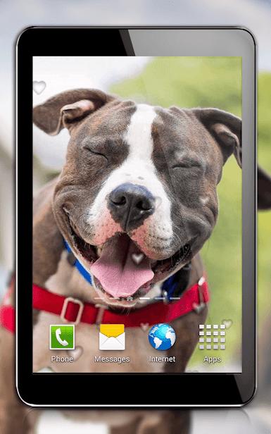 Собаки скриншот 4
