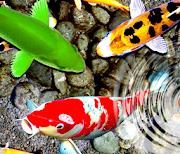 рыба живые обои: водный сад logo
